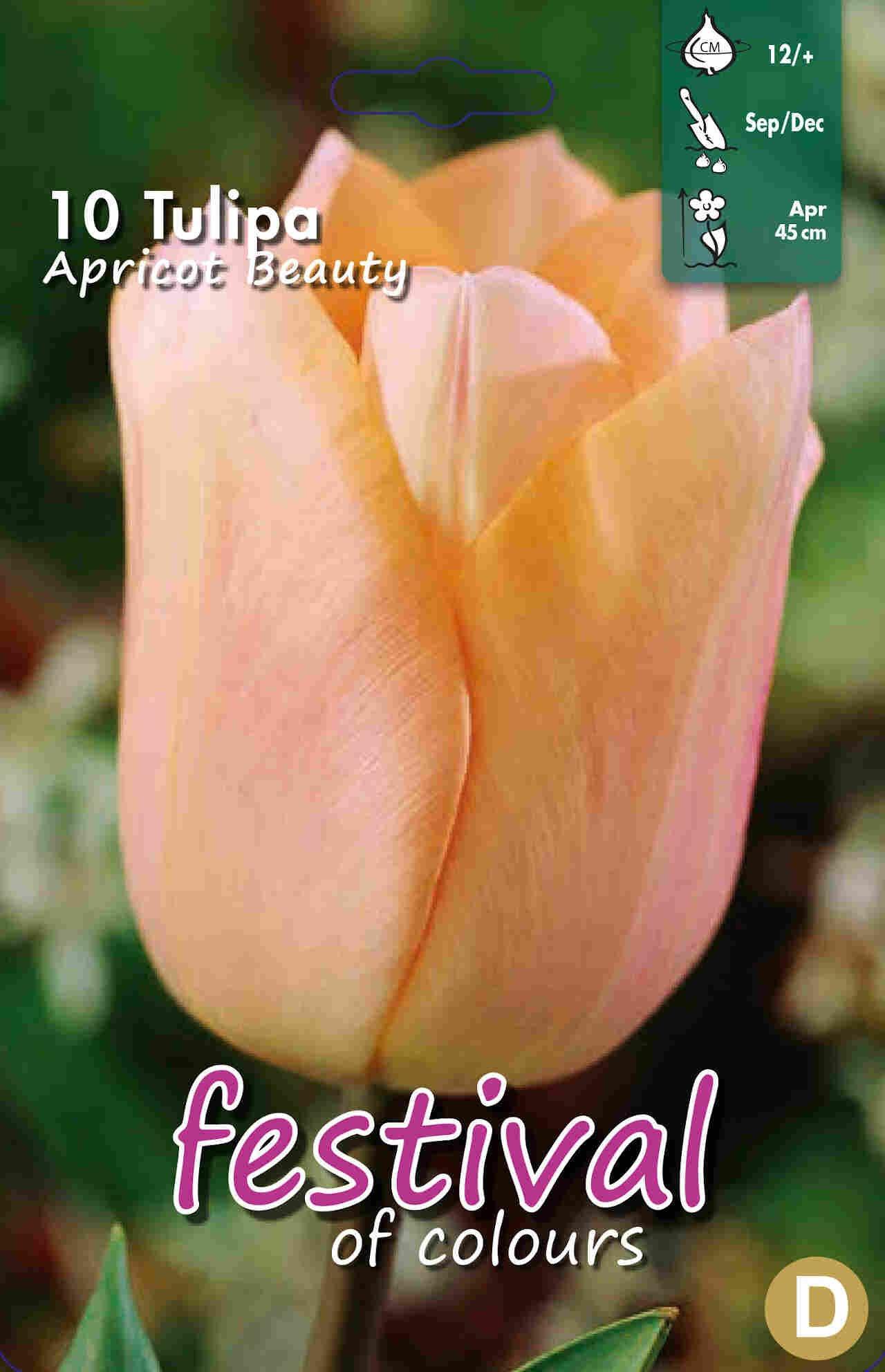 Tulipanløg - Tulipa Apricot Beauty 12/+