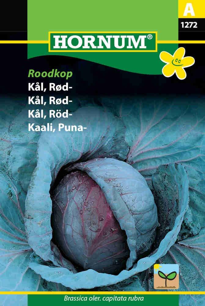 Rødkål frø - Roodkop