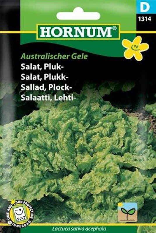 Salatfrø - Pluk - Australischer Gele