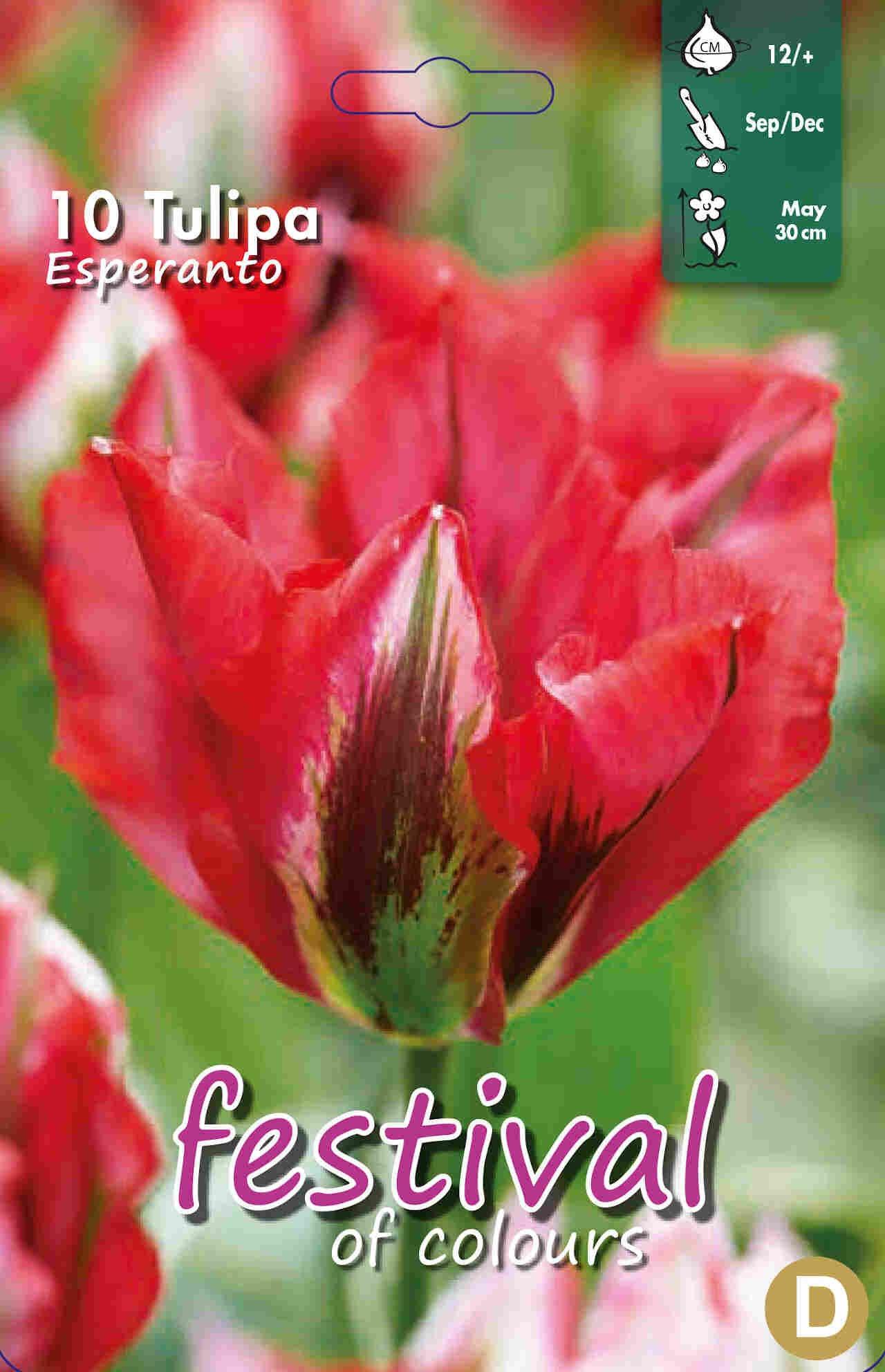 Tulipanløg - Tulipa Esperanto 12/+