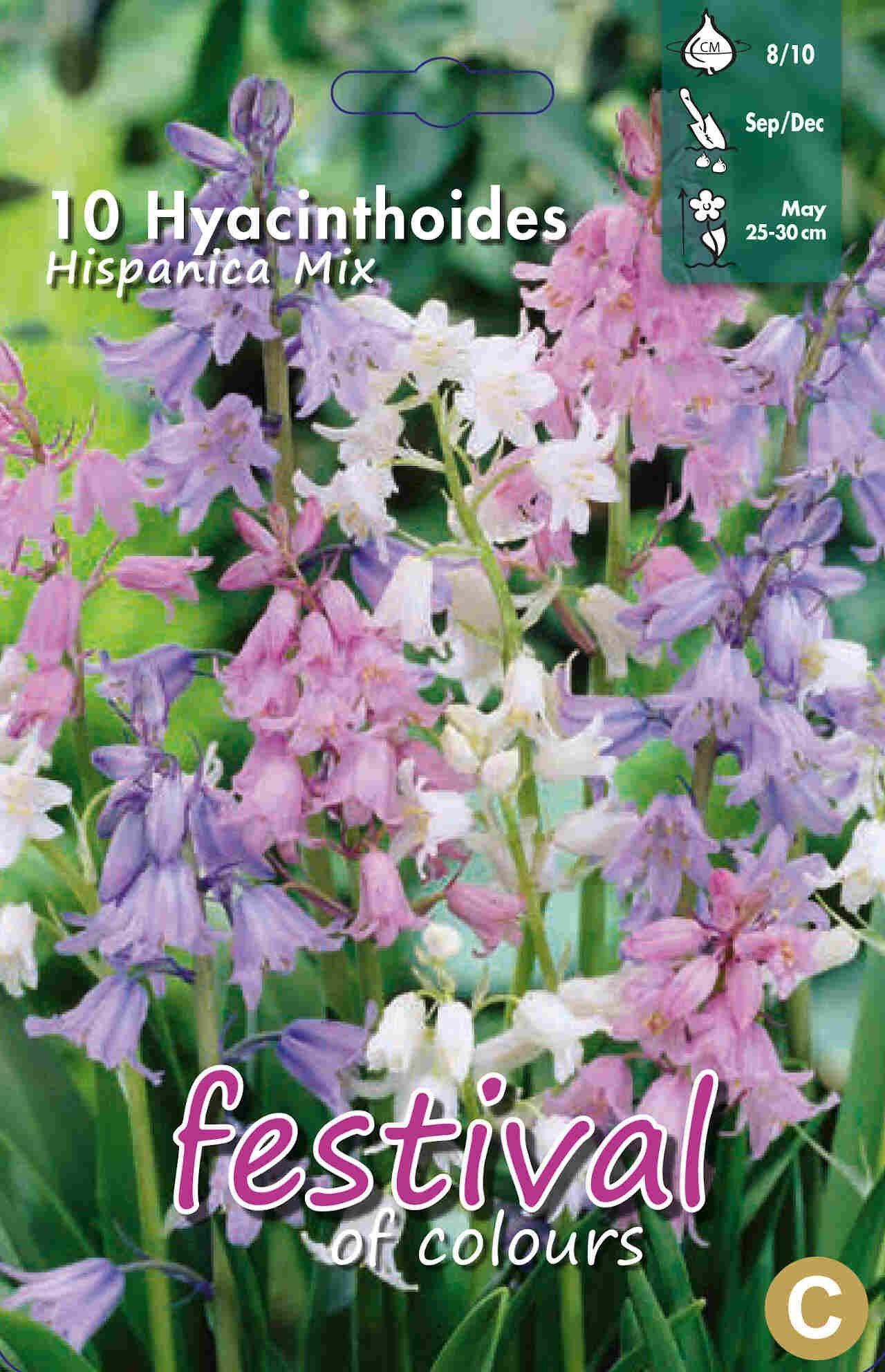 Spansk klokkeskilla - Hyacinthoides hispanica Mixed 8/10