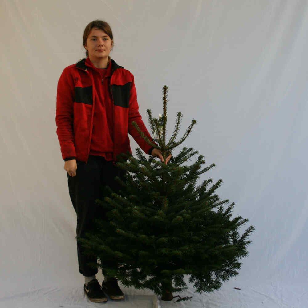 Juletræ - Nordmannsgran - 100-125cm