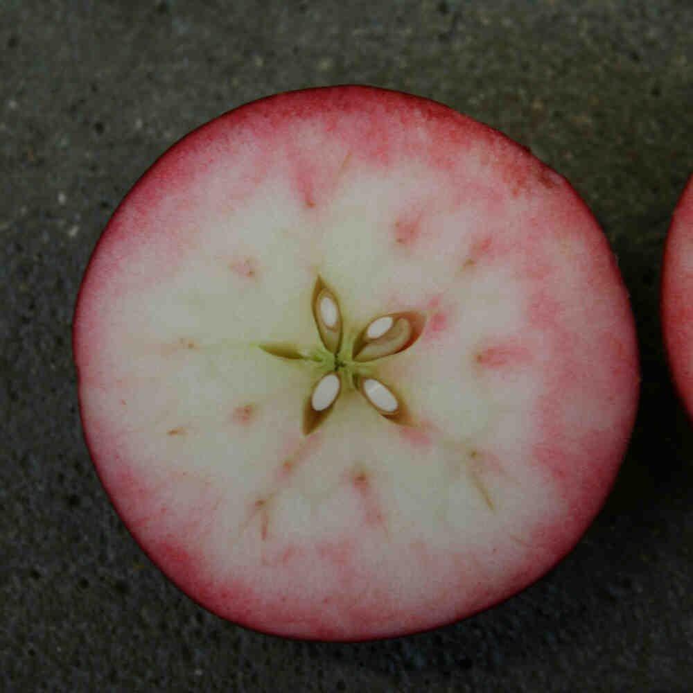 Vesterhavsmost Æblemost Rosette 0,25L