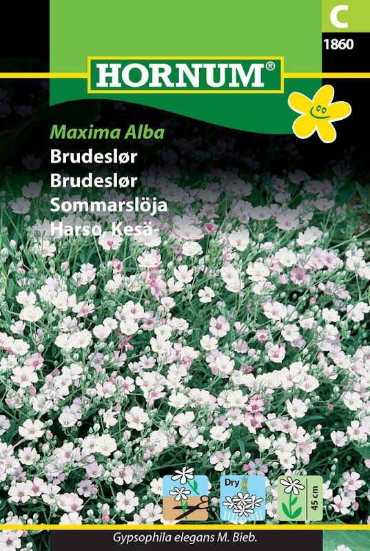 Brudeslør frø - Maxima Alba