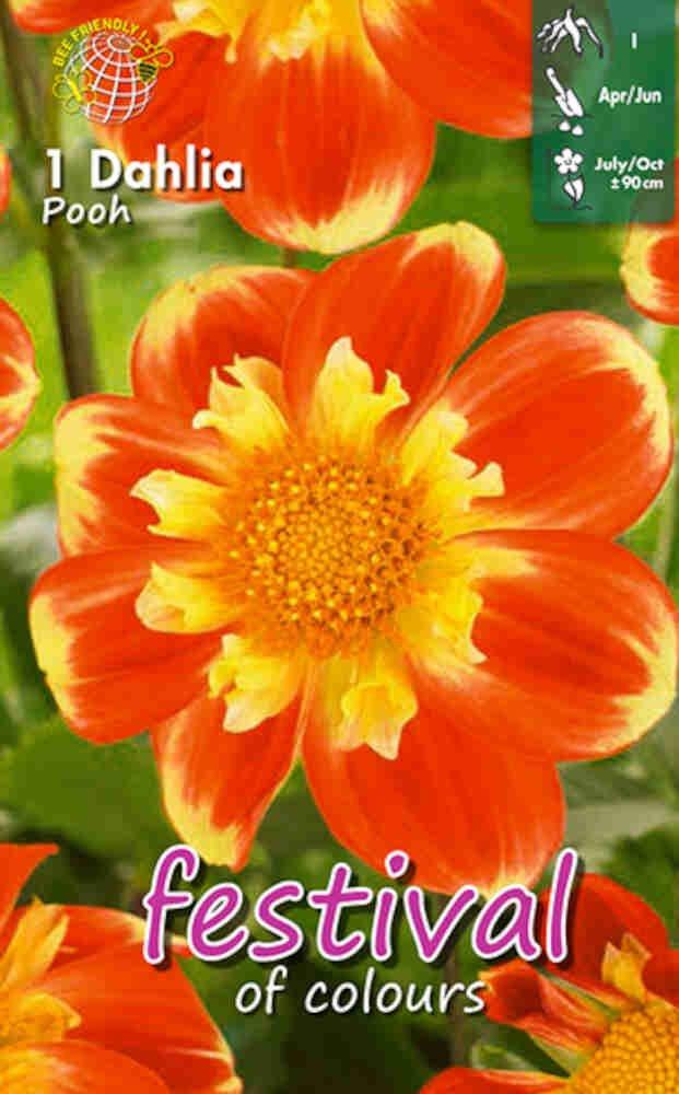 Dahlia 'Pooh Collerette'