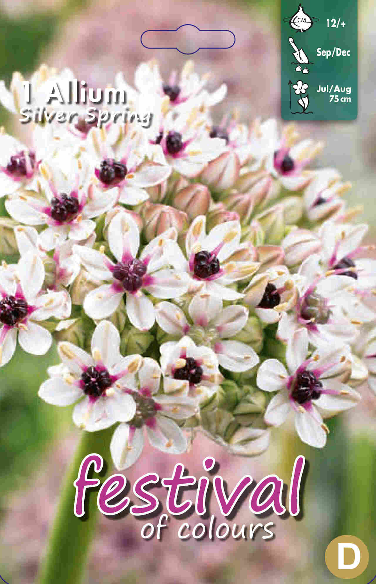 Prydløg - Allium Silver Spring 12/+