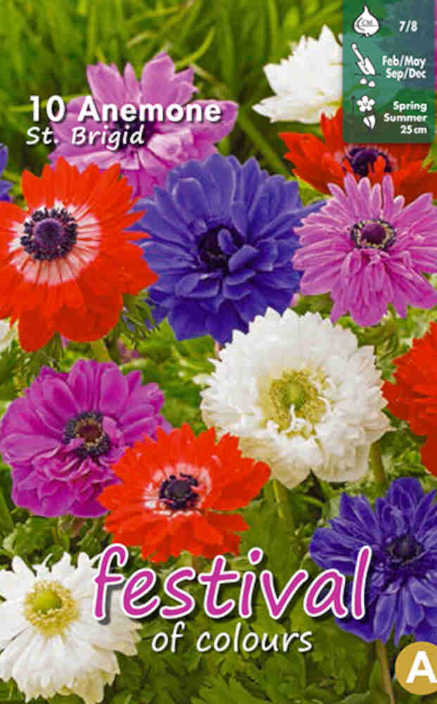 Anemone St Brigid mixed 7/8