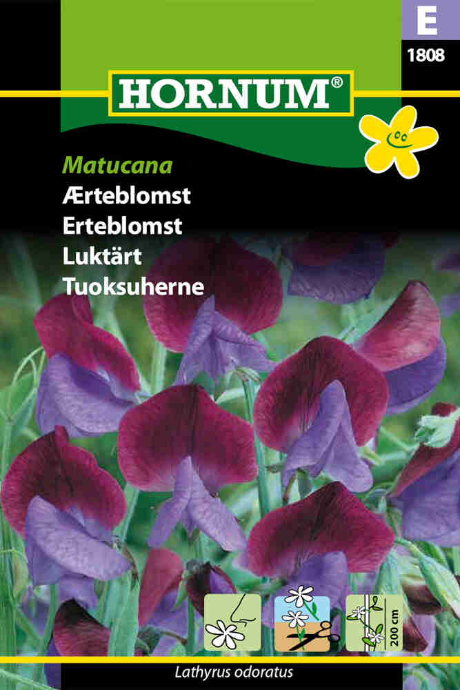 Ærteblomstfrø - Matucana