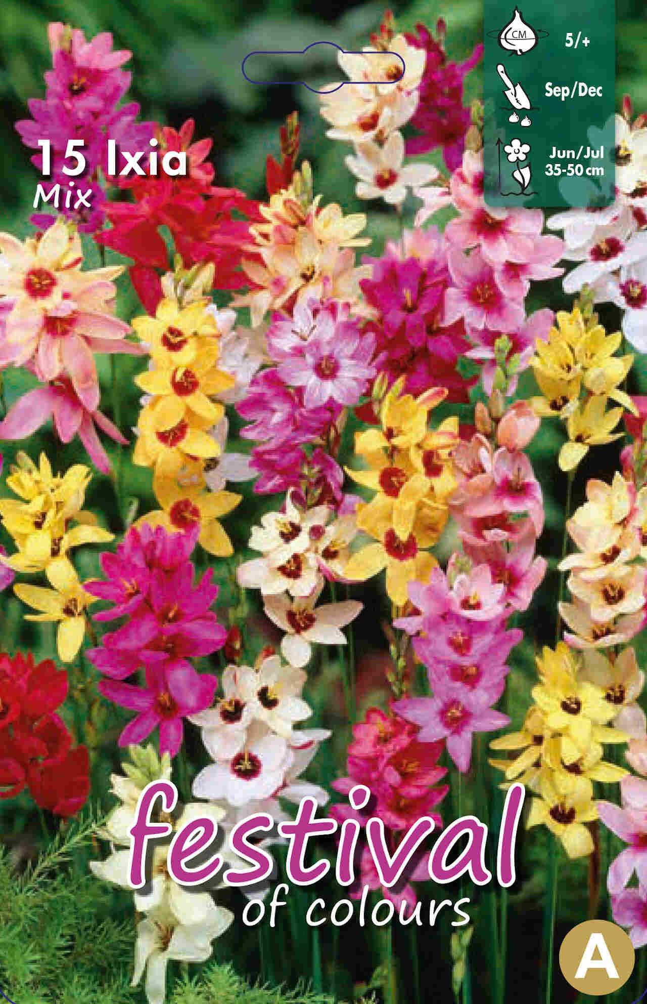 Ixia Mixed 5/+