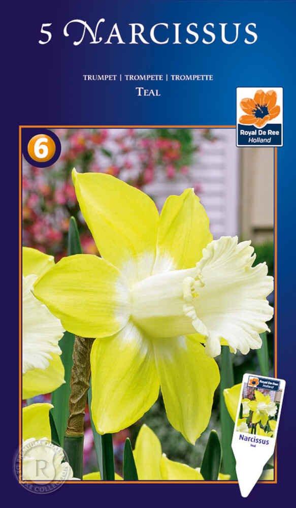 Påskeliljeløg - Narcissus Teal 12/14