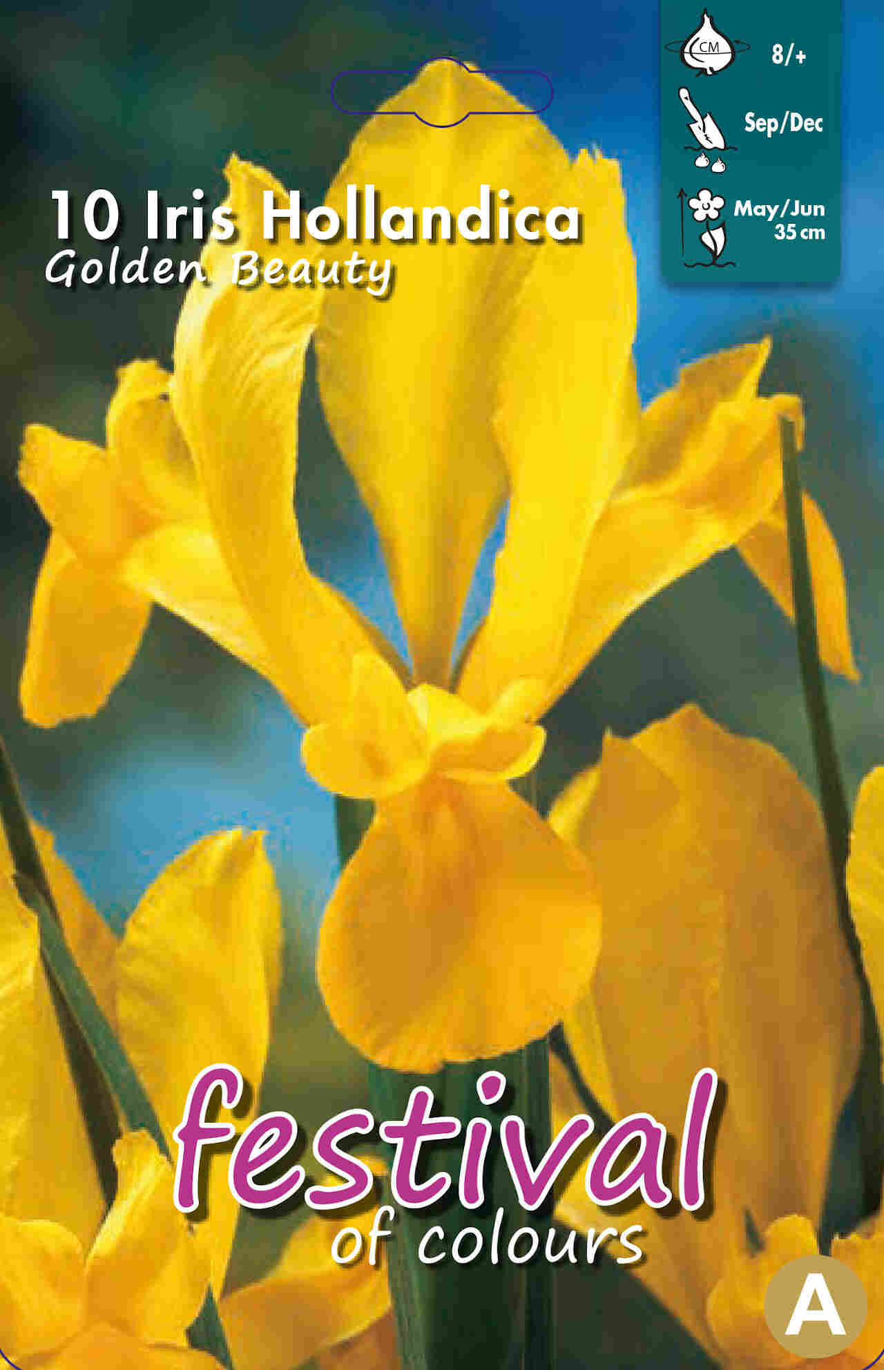 Iris Golden Beauty 8/+