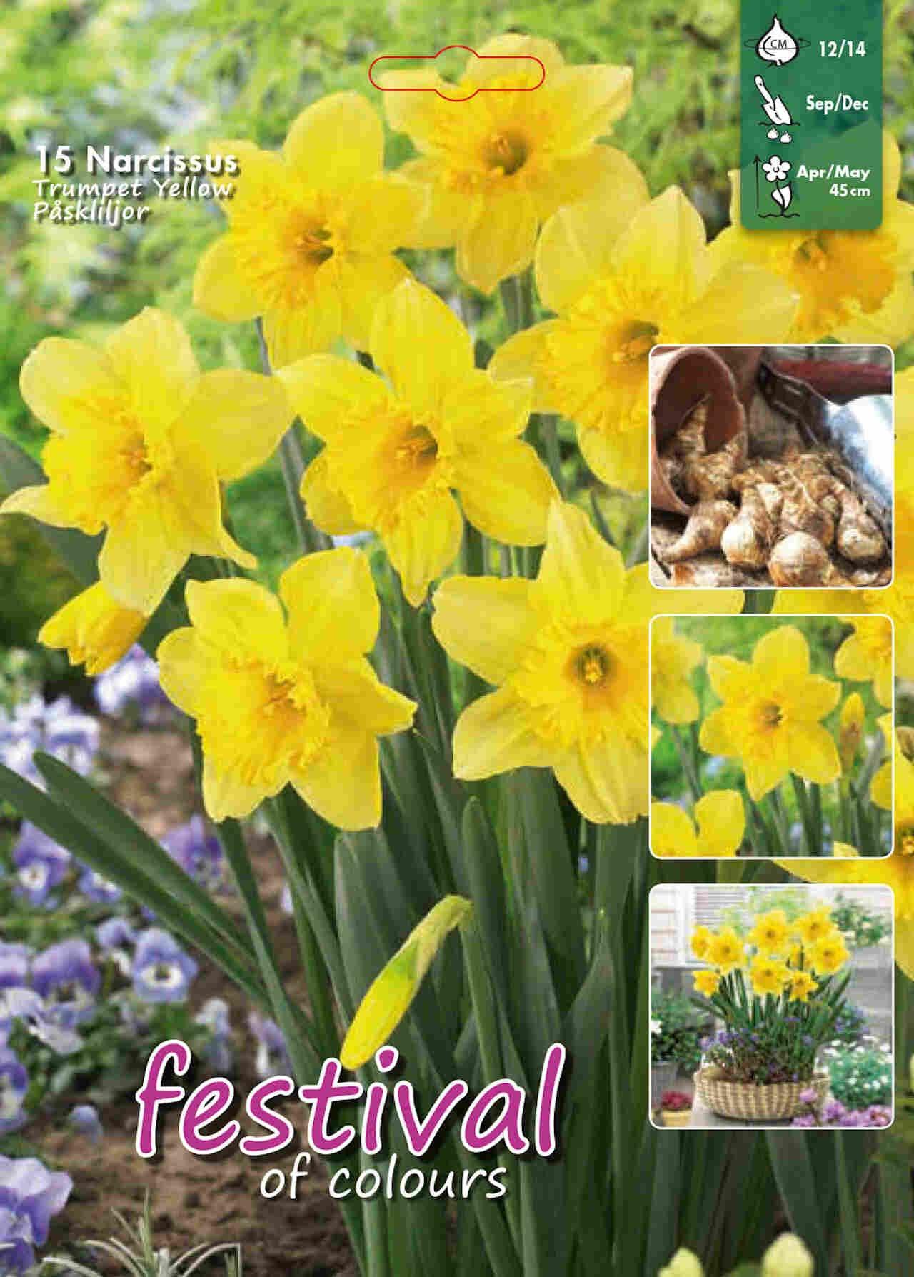 Narcisses Yellow Trompet 12/14
