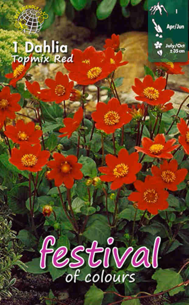 Dahlia Red Topmix