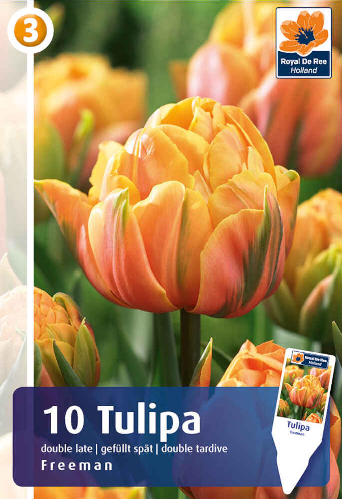 Tulipanløg - Tulipa Freeman 11/12