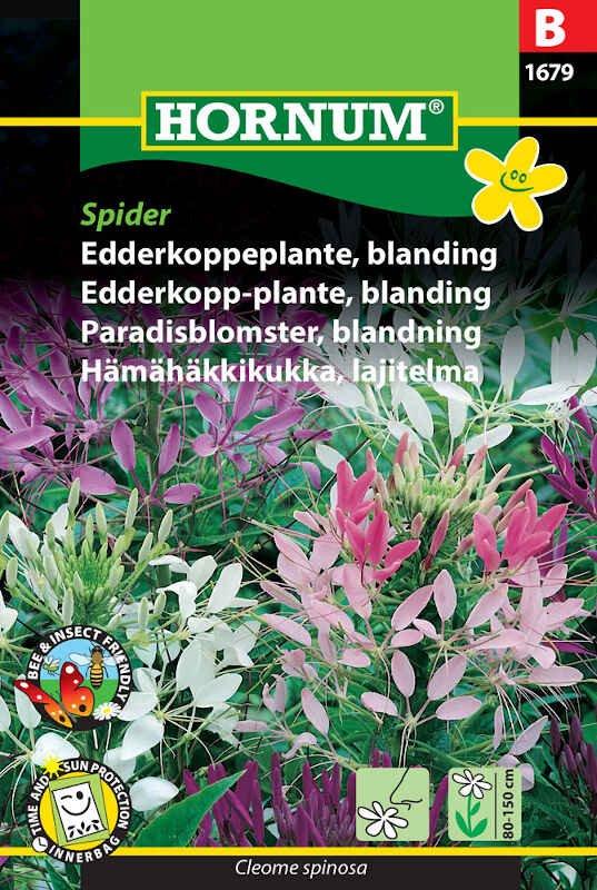 Edderkoppeplante frø - blanding - Spider