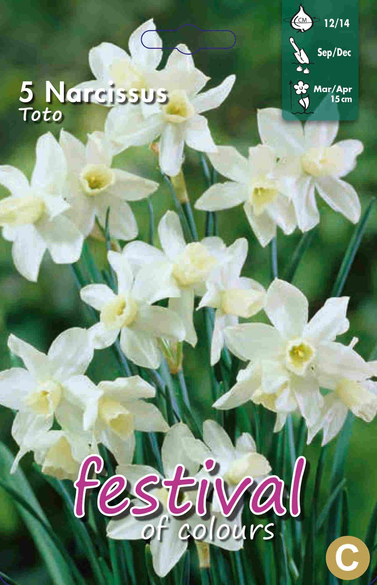 Påskelilje løg - Narcissus Toto 12/14