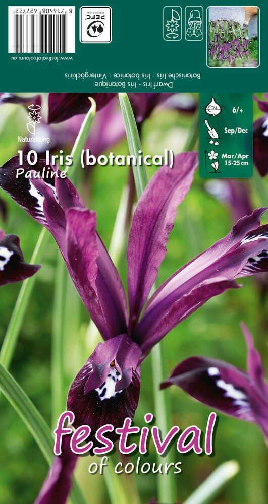 Iris Pauline 6/+