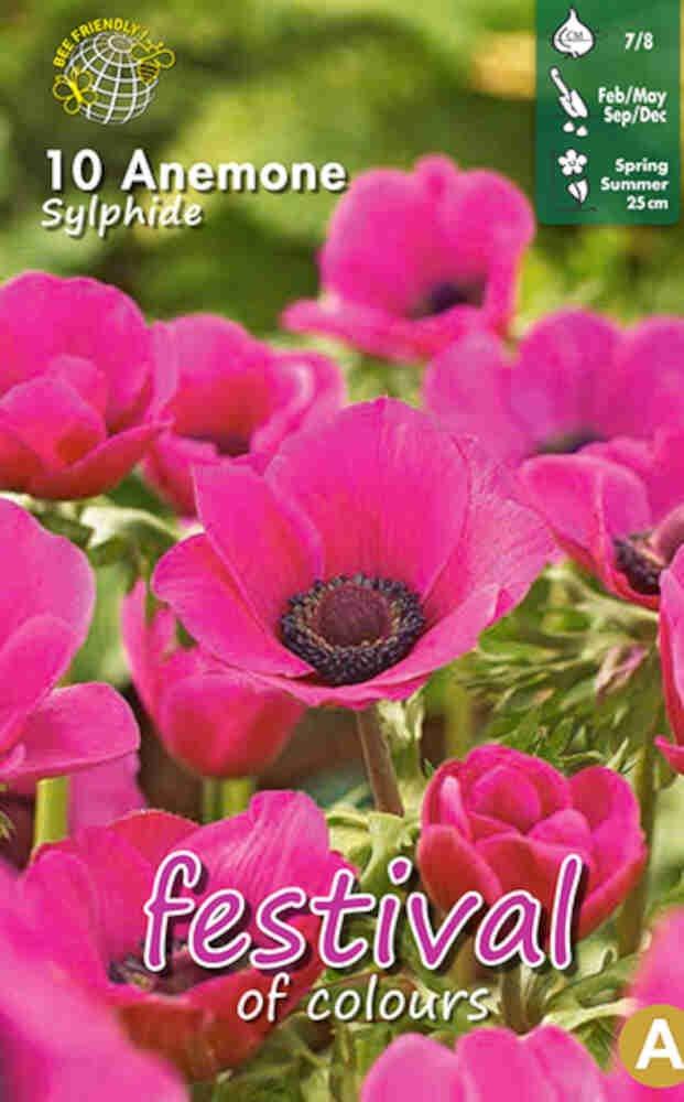 Anemone Sylphide 7/8