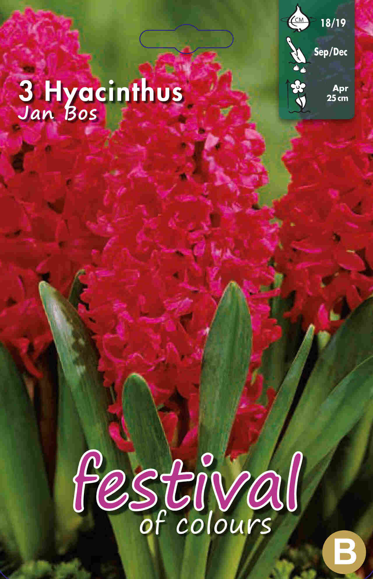 Hyacinths Jan Bos 18/19