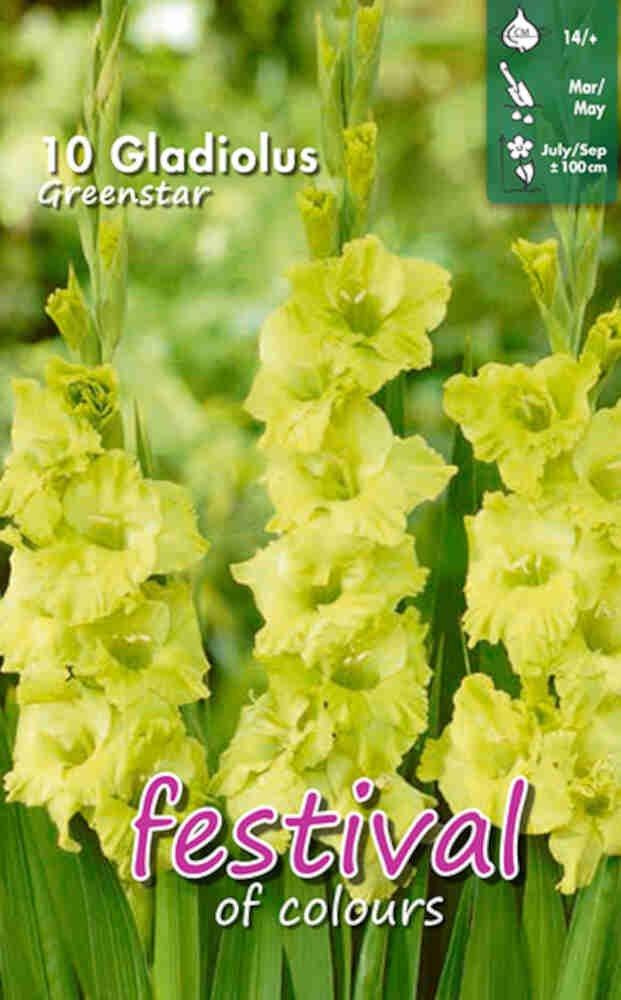 Gladiolus Greenstar Large-flowered, 7 stk