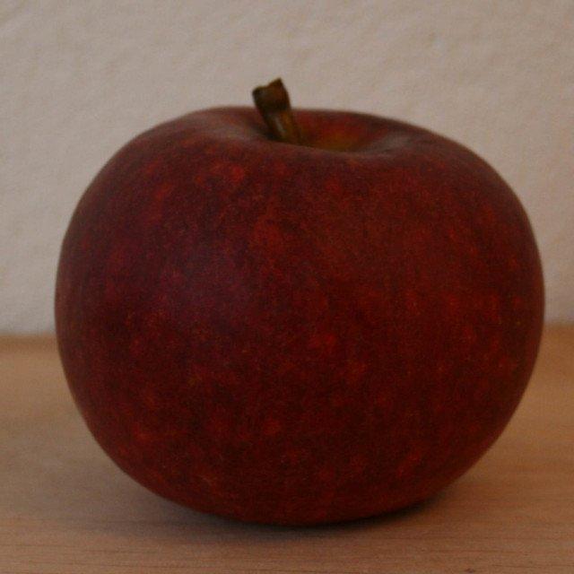 Æbletræ - Malus domestica 'Rød Ingrid Marie' - Dværg
