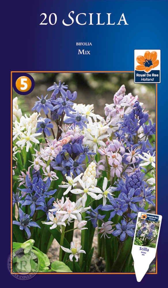Skilla - tobladet - Scilla bifolia mix 5/+