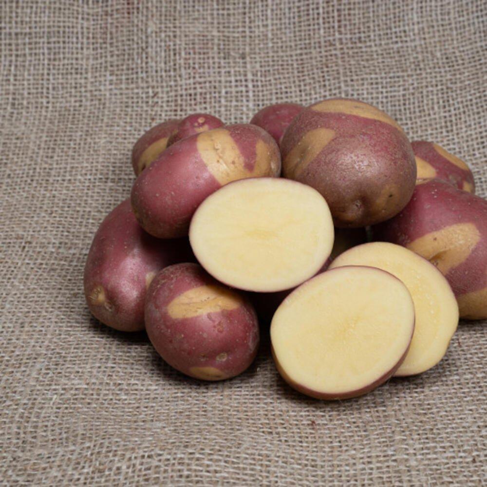 Celebration læggekartofler med rødt skind