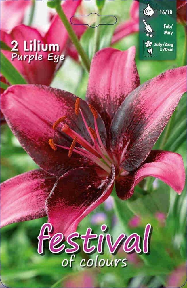 Lilje - Lilium PurpleEye (x2) 16/18