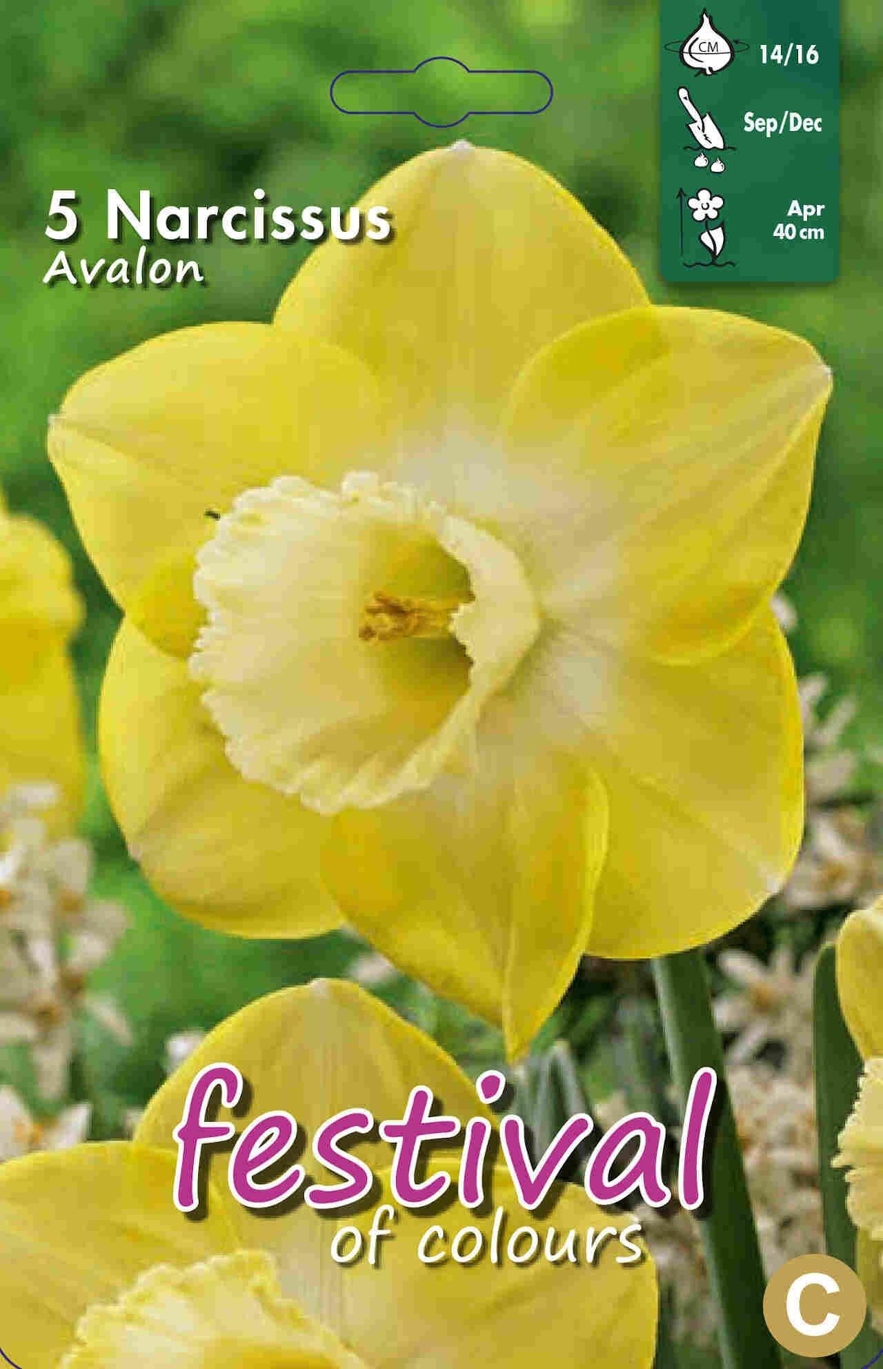 Påskeliljeløg - Narcissus Avalon 14/16