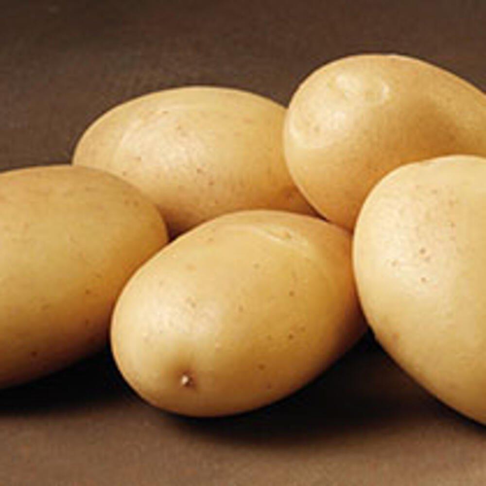 Læggekartofler - Hansa