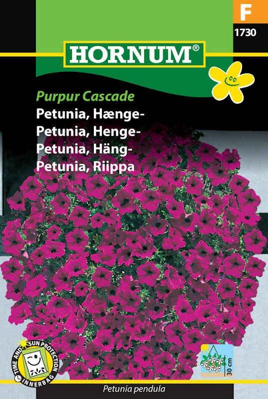 Petunia frø - Hængepetunia - Purpur Cascade
