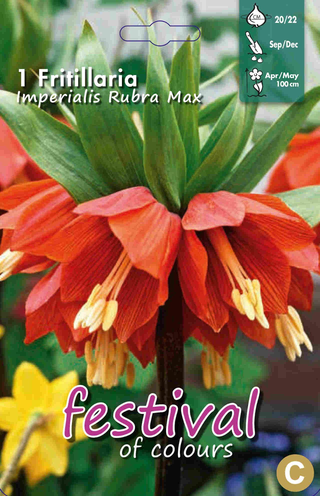 Kejserkrone - Fritillaria Rubra Maxima 20/22