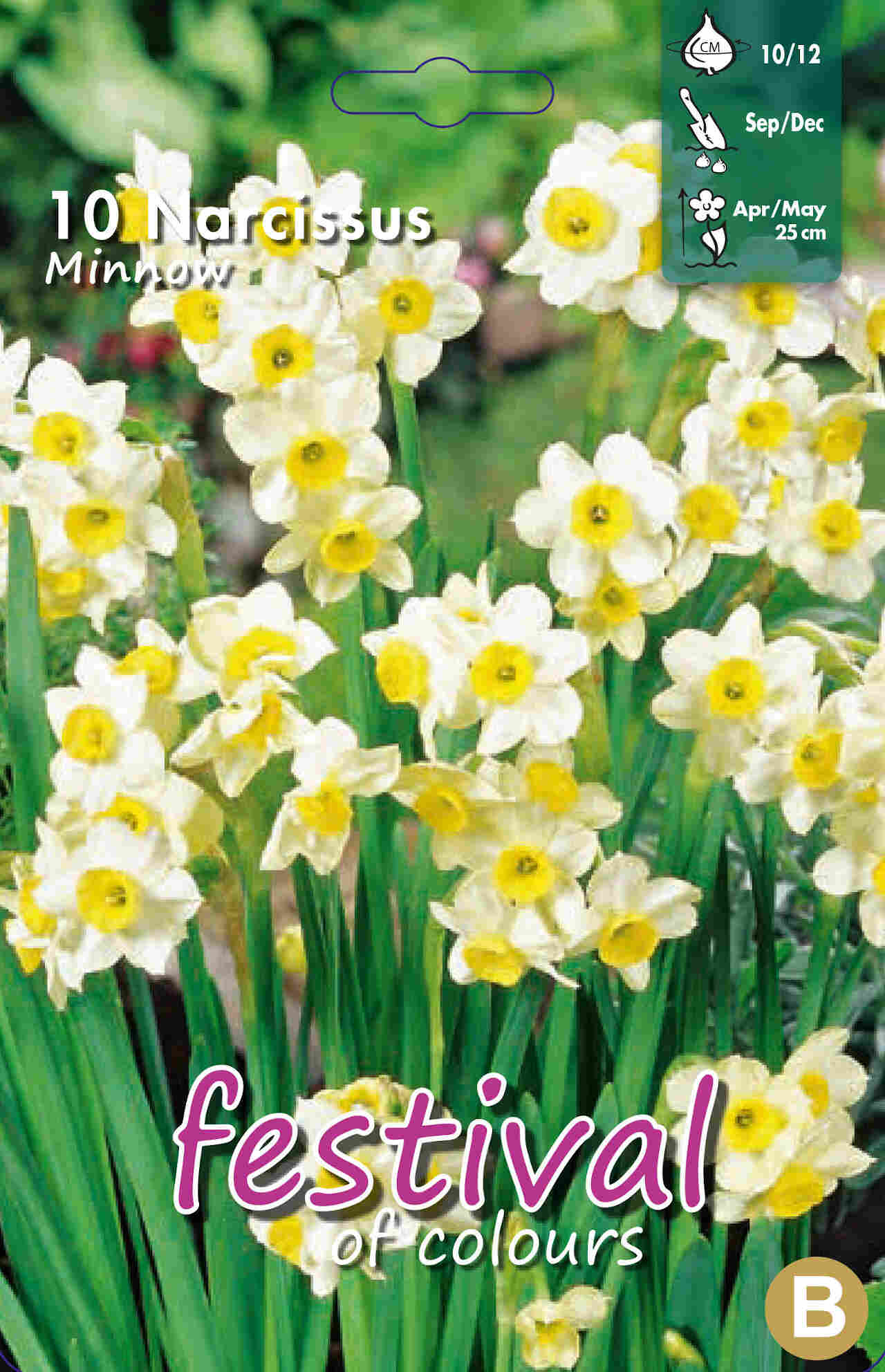 Påskeliljeløg - Narcisses Minnow 10/12