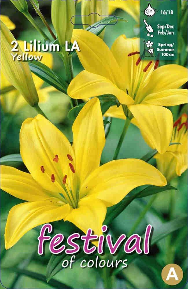 Lilje - Lilium La Yellow (x2) 16/18