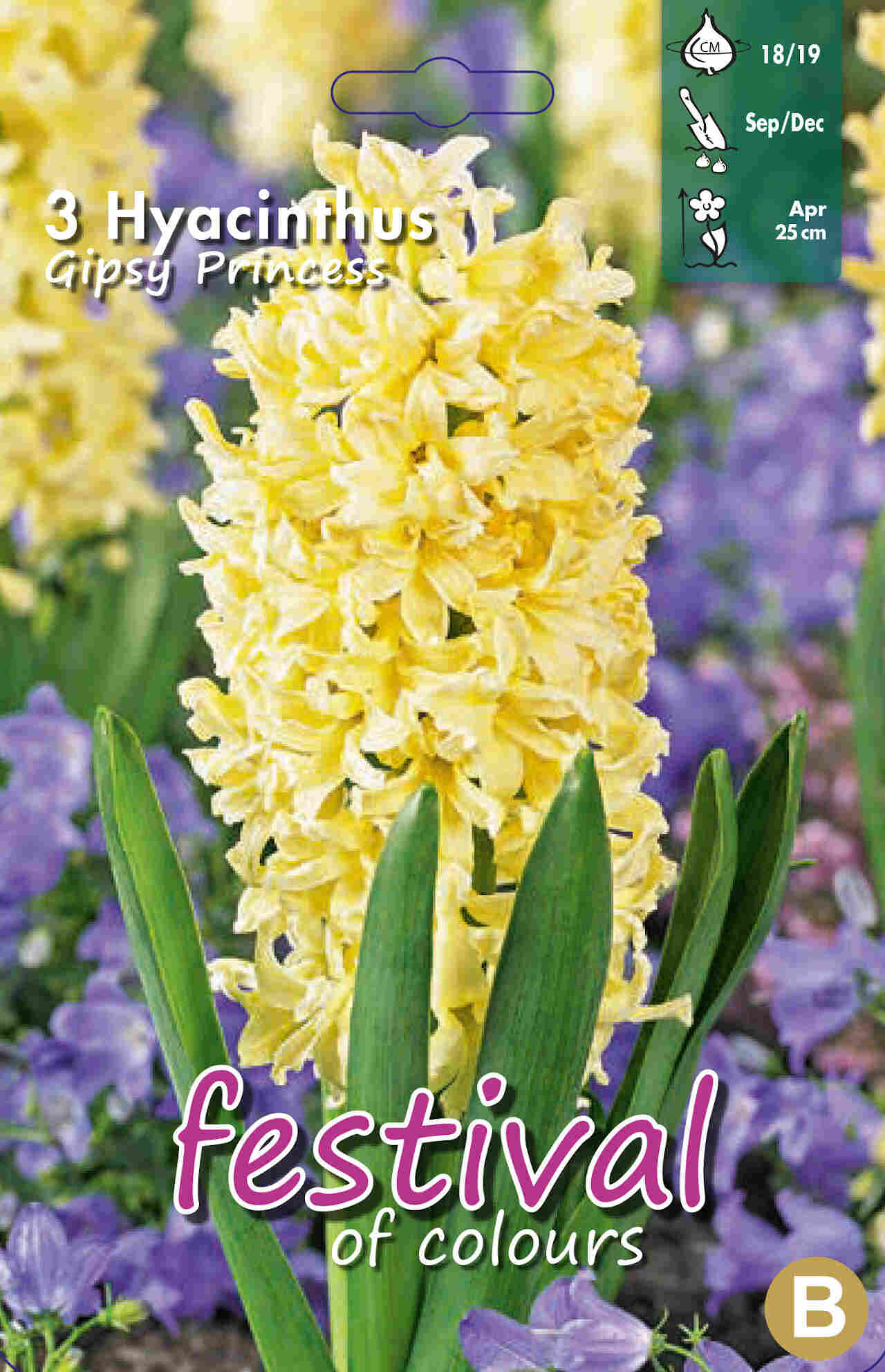 Hyacint - Hyacinthus Gipsy Princess 18/19