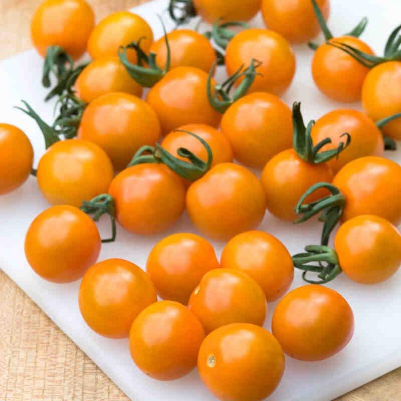 Tomatplante - Cherrytomat 'Orange Paruche'