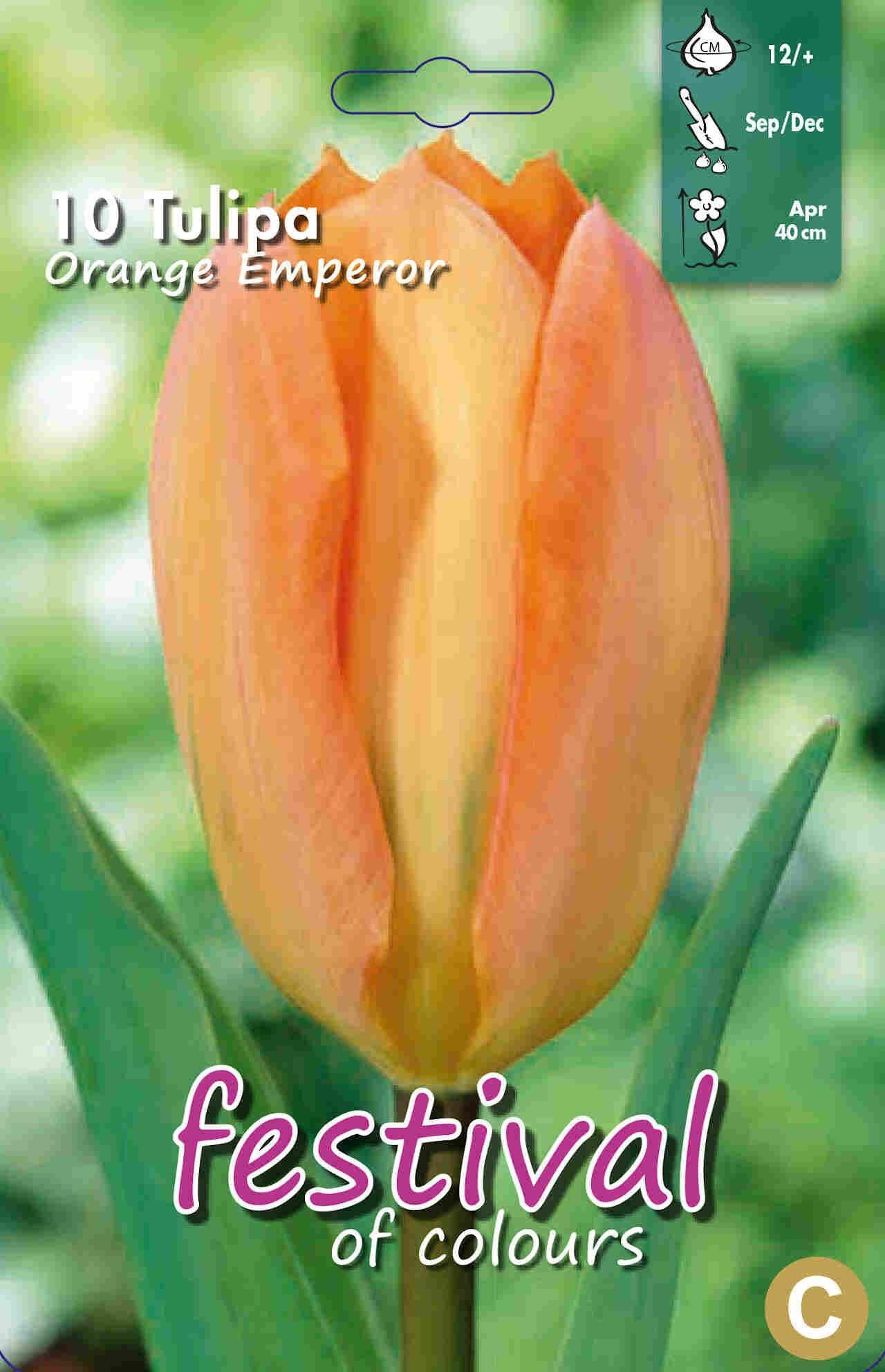 Tulipanløg - Tulipa Orange Emperor 12/+