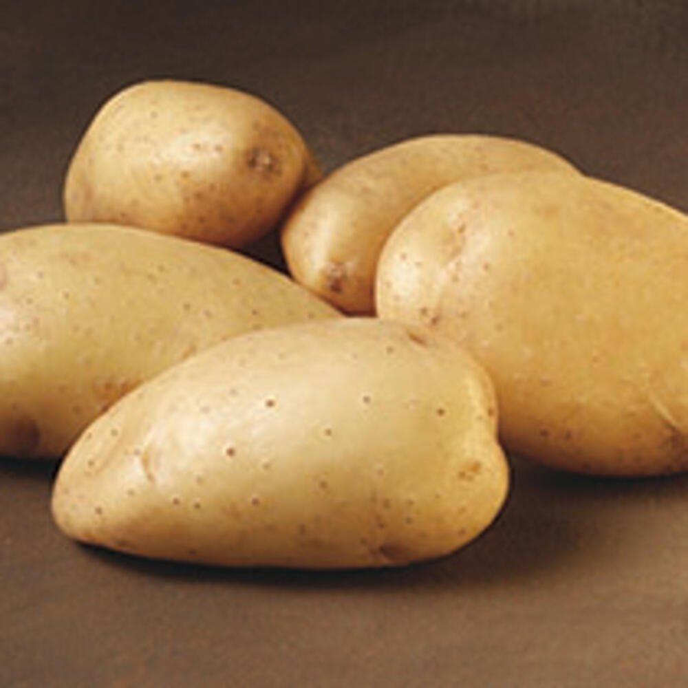 Bintje læggekartofler gammel dansk sort