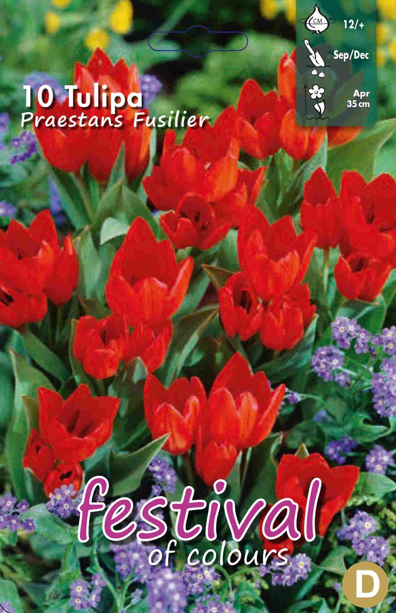 Tulipanløg - Tulipa Praestans Fusilier 12/+