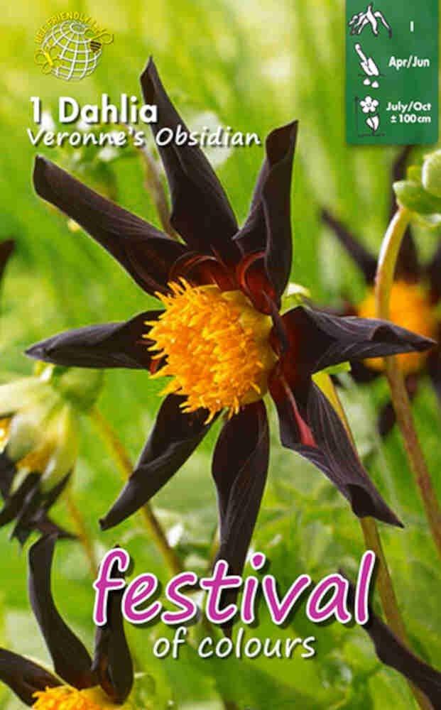 Dahlia Veronne's Obsidian Miscellaneous