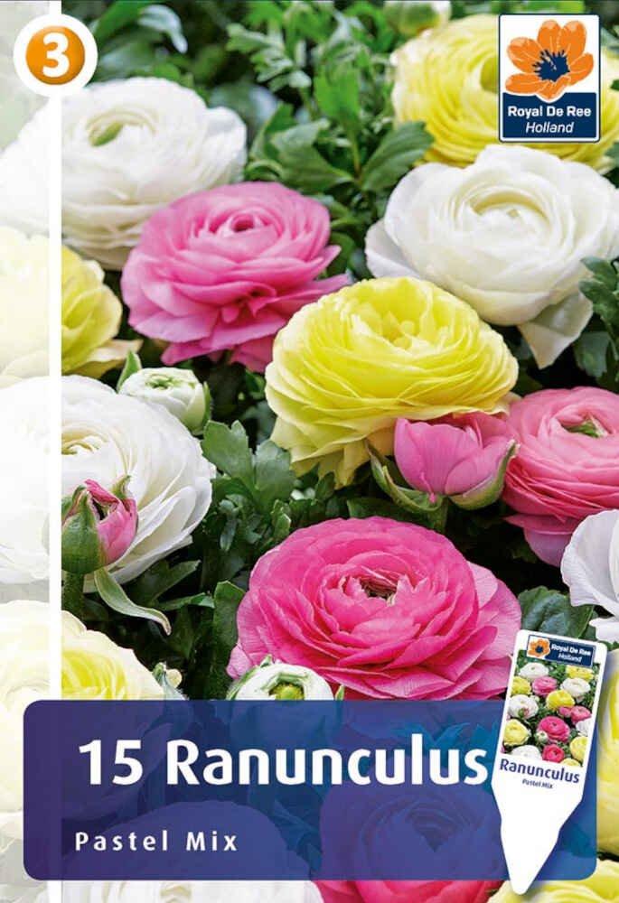 Ranunkel - Ranunculus Pastel Mix 6/7
