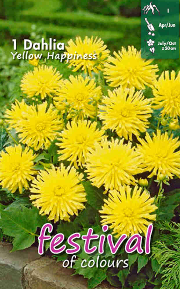 Dahlia Yellow Happiness (Semi)Cactus