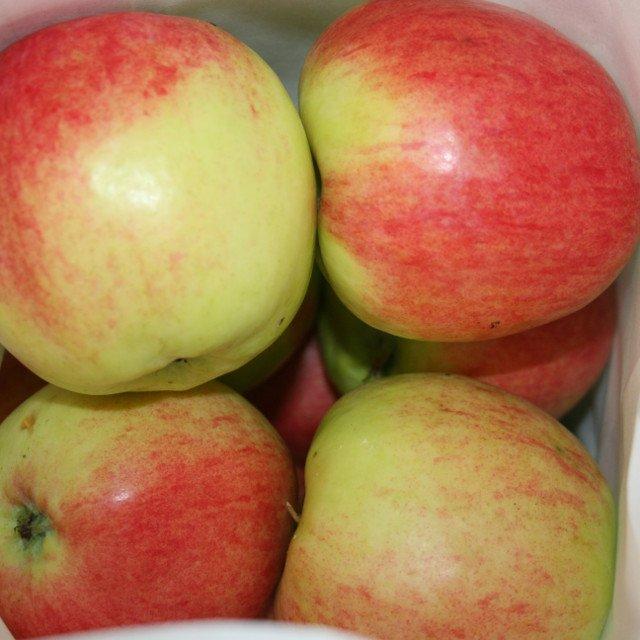 Æbletræ - Malus domestica 'Nanna'