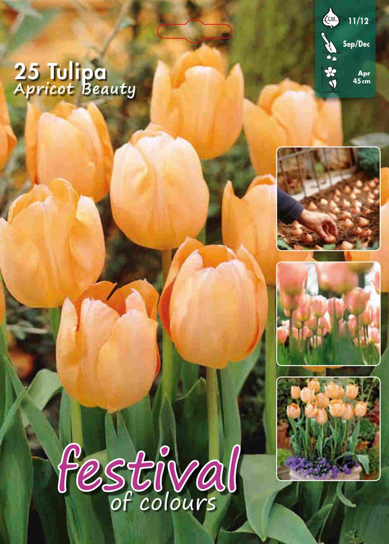 Tulips Apricot Beauty 12/+ Big bag