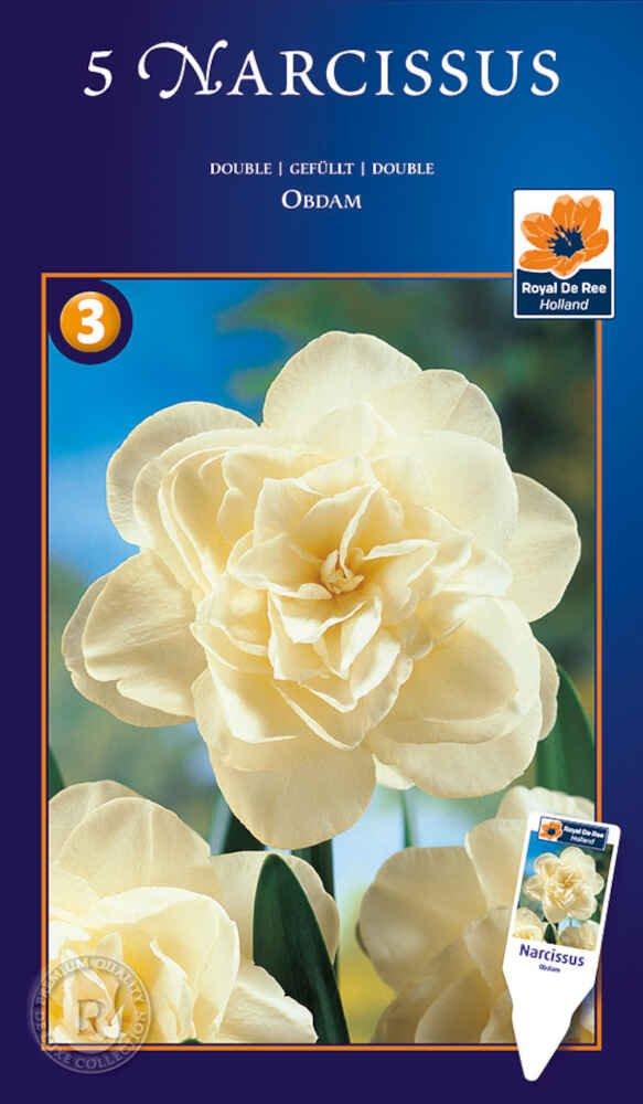 Påskeliljeløg - Narcissus Obdam 14/16