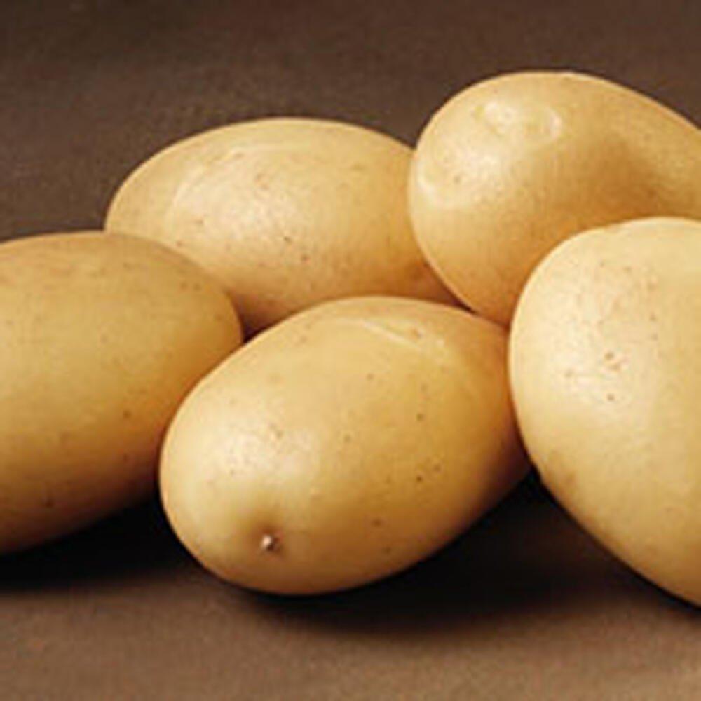 Ditta læggekartofler, almindelig kartoffel
