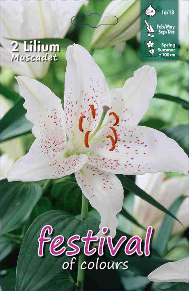 Lilje - Lilium Muscadet Oriëntal Groep (x2) 16/18