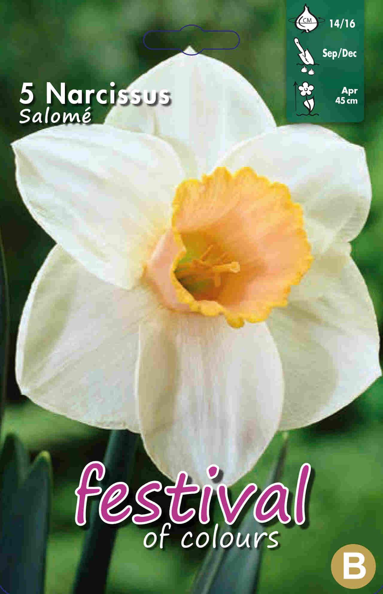 Påskeliljeløg - Narcissus Salomé 14/16